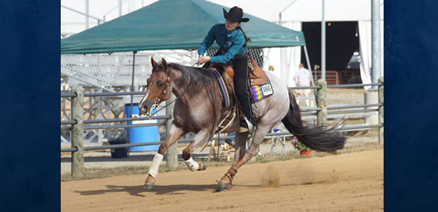 Chapman Reining Horses would like to congratulate Becky McCabe on Red Roan Cowgirl and Whizzen Footwork for her fantastic showing at the Virginia State Fair! Becky won  the first day […]