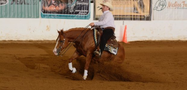 Chapman Reining Horses and Rising Star Farm congratulate Shannon Snyder showing his horse Fancy Dual Train. 2019 NRHA World Champion Limited Non Pro!!