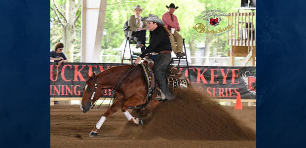 6 yr old sorrel mare with LTE over $33k, by Five Million Dollar sire Gunners Special Nite and out of a NRHA money earning granddaughter of Shining Spark. Open level […]