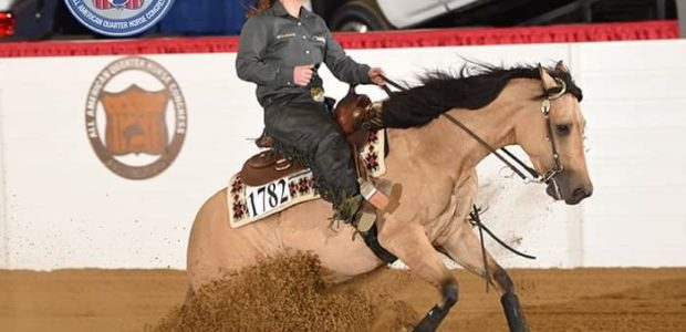 Gorgeous 9 yr old buckskin mare in foal to SG Frozen Enterprize. She won a lot of futurity money and derby money as a younger horse, then got sore, so […]