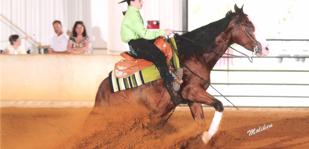 Chapman Reining Horses would like to congratulate the following customers on their placings at the EPRHA No Foolin Slide Alexis McCoy was Reserve Champion in the Youth Rookie and 5th […]