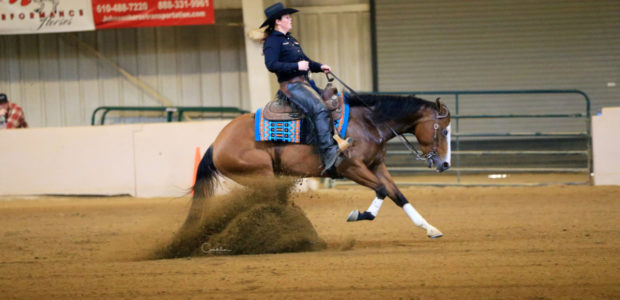 For sale: 5 yr old paint mare, Gunpowder N Whiz. Excellent show horse! Miranda has earned 5 APHA points in Open Ranch Pleasure, 1 in Open Ranch Riding and 3 […]
